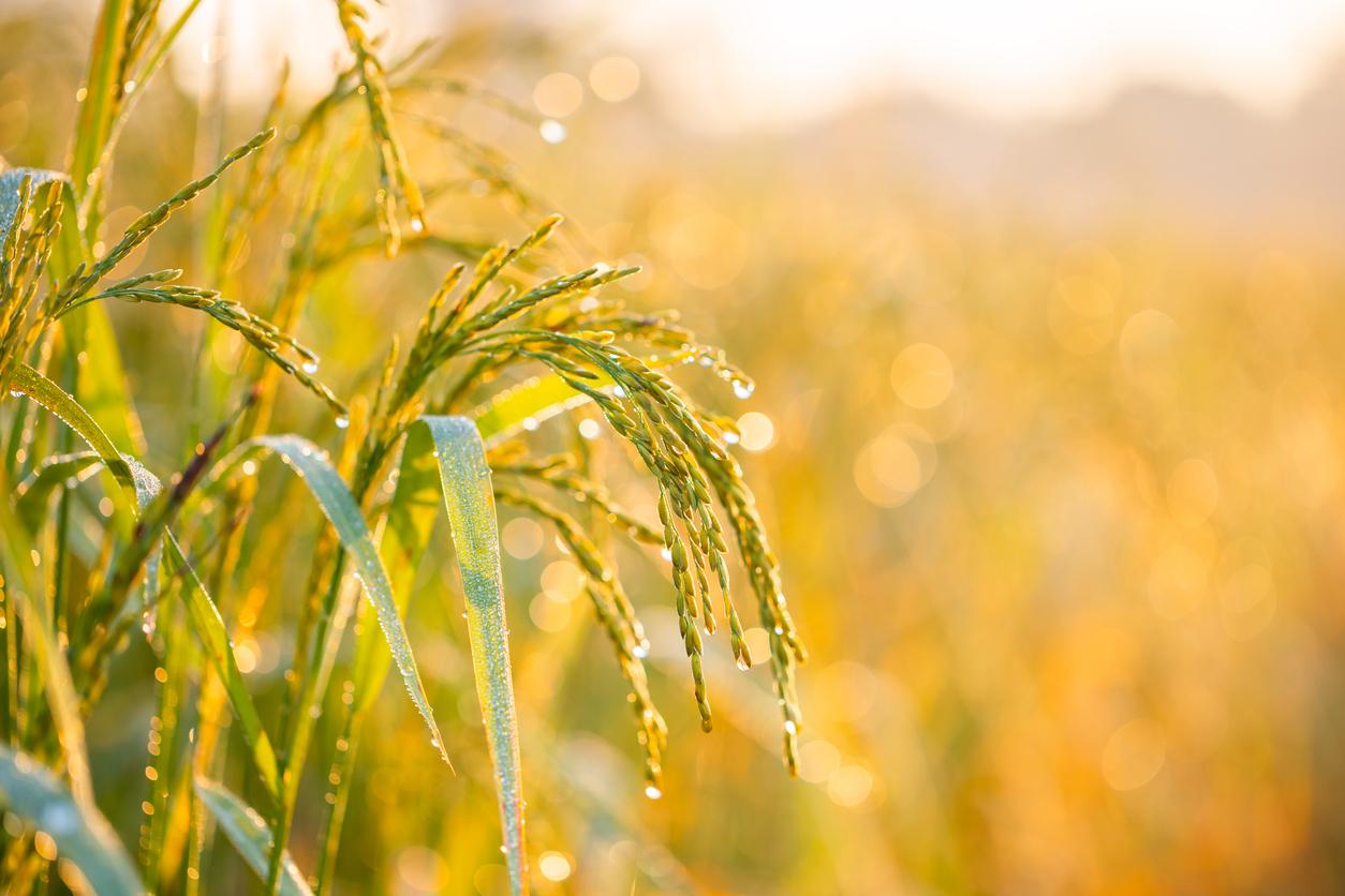 Culturile MG înseamnă reducerea poluării