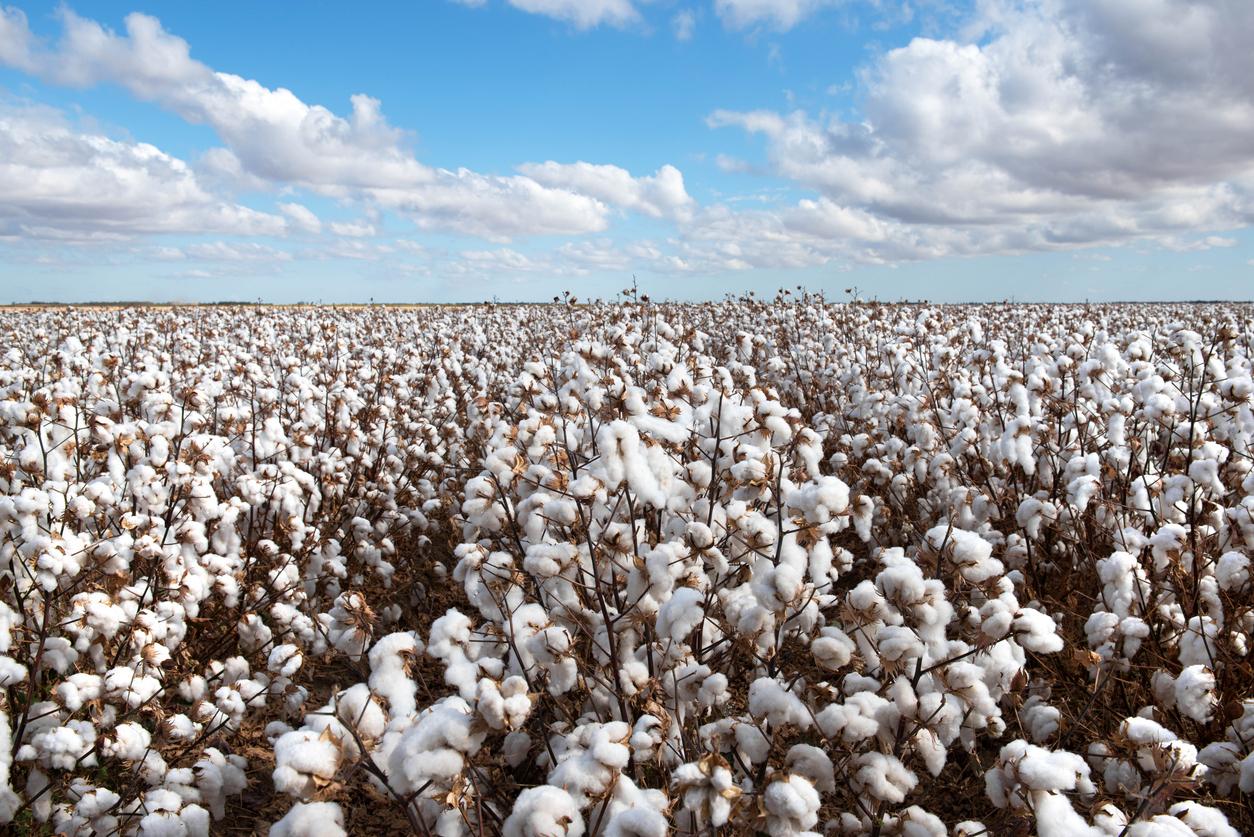 Biotehnologiile agricole au adus Argentinei 134 miliarde euro