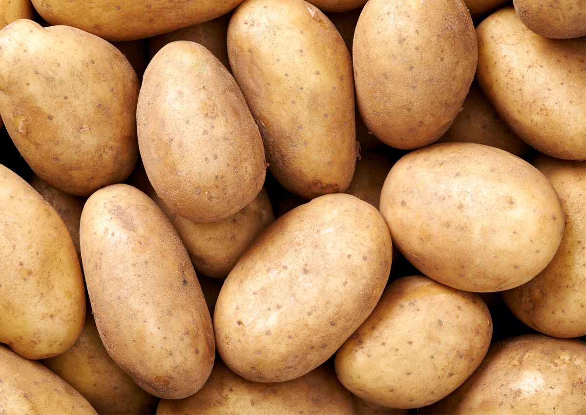 Field Trials Reveal Blight Resistant GM Potatoes- Crop Biotech ...