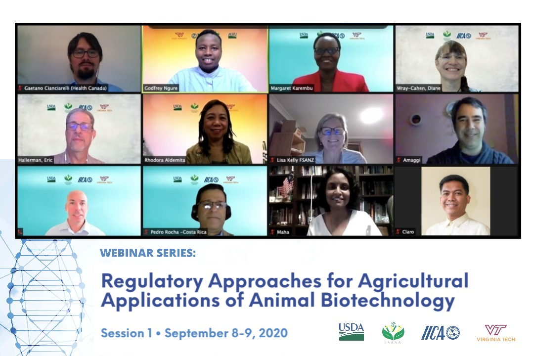 ISAAA Kicks Off Discourses on Regulatory Approaches for Animal Biotech