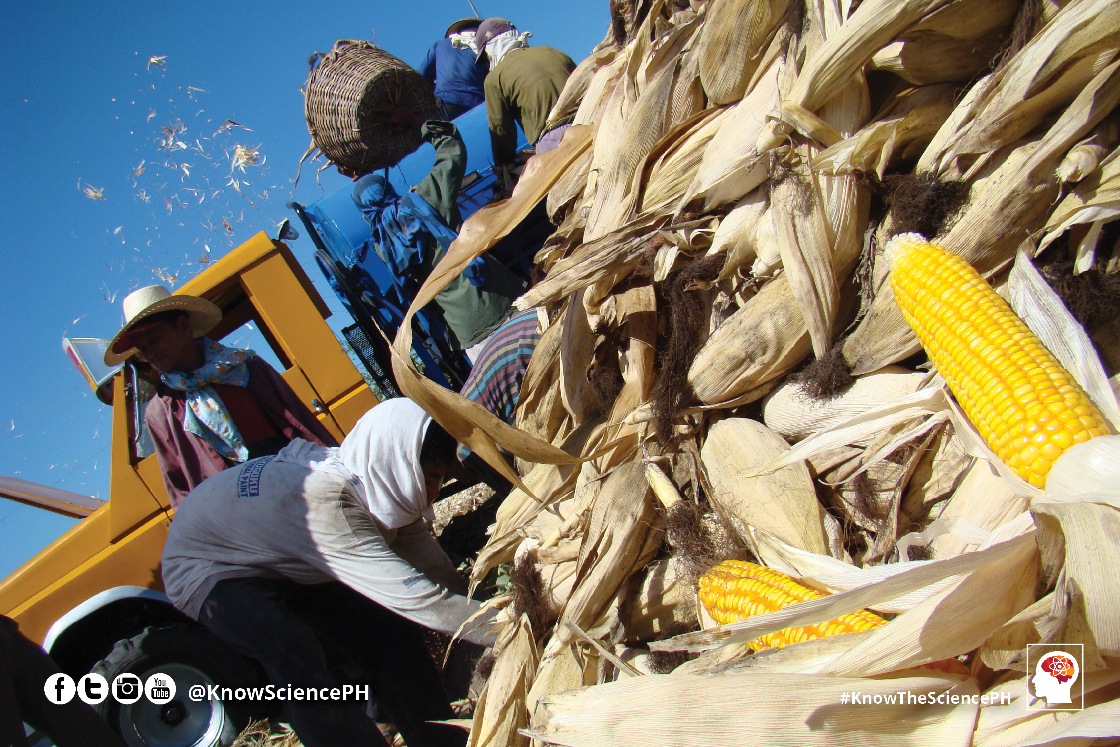 Why do Filipino Farmers and Scientists Support Biotech Crops?