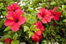 Biotechnology In Ornamental Plants Isaaa Org