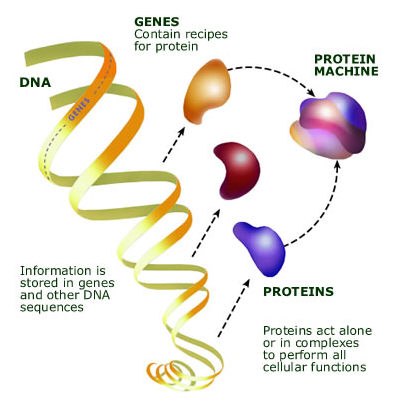 Dna Mapping And Sequencing on