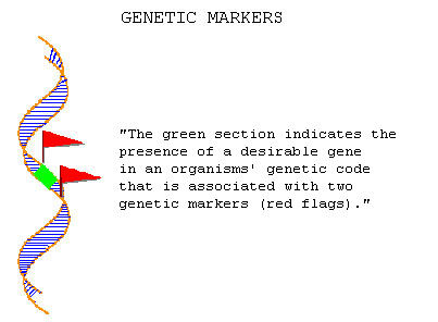 Molecular Breeding and Marker-isted Selection | ISAAA.org on homozygous definition, cell definition, allele definition, hybrid definition, rna definition, genotype definition, autosomes definition, recessive definition, homologous definition, crossing over definition, transcription definition, genome definition, heredity definition, chromosomes definition, offspring definition, mutation definition, genetics definition, nitrogen base definition, trait definition,