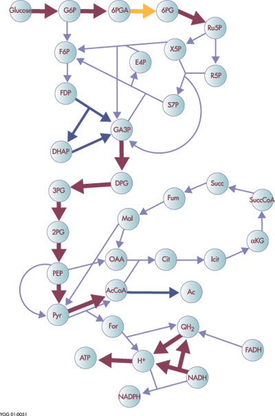 direct effects of structural model