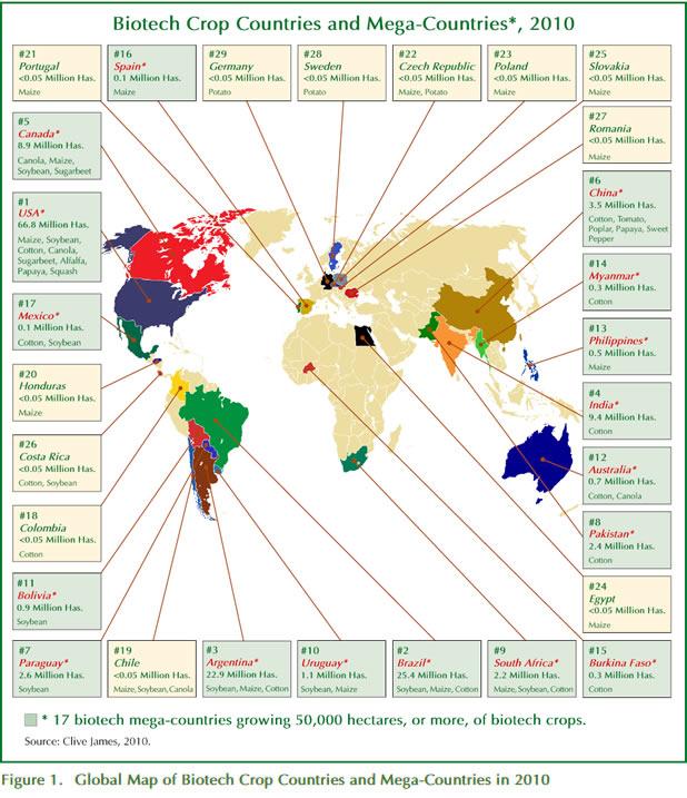 2010年世界转基因作物现状:Global Status of Commercialized Biotech/GM Crops in 2010 - 喜欢吃桃子 - wangyufeng的博客